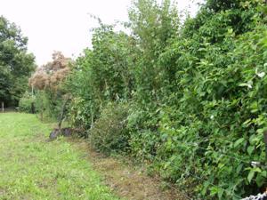 Froschnetz naturgarten gestalten f r amphibien - Gartenrand gestalten ...