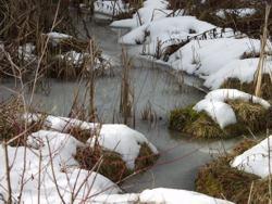 Froschnetz amphibien arten systematische bersicht for Goldfische im winter im teich