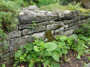 Froschnetz naturgarten gestalten f r amphibien for Naturgarten gestalten